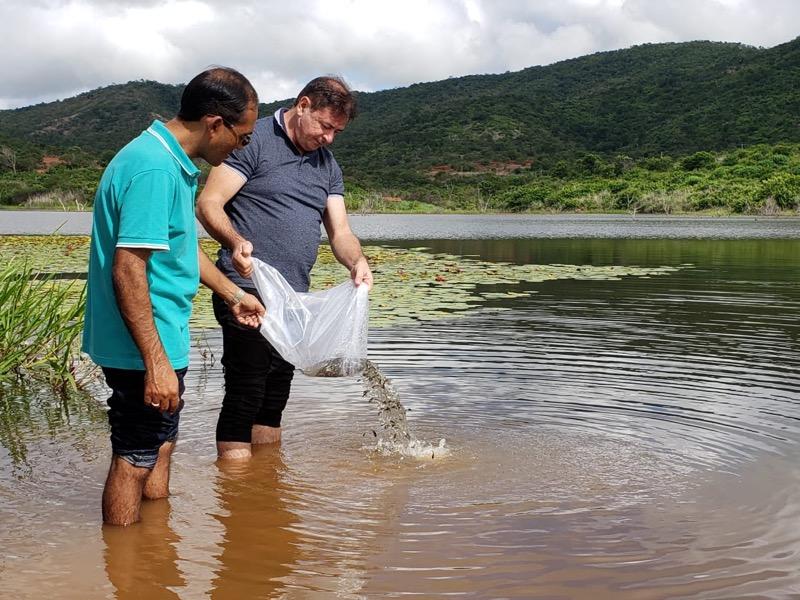 Peixamento: Açudes de Várzea Alegre recebem 20 mil alevinos de tilápia