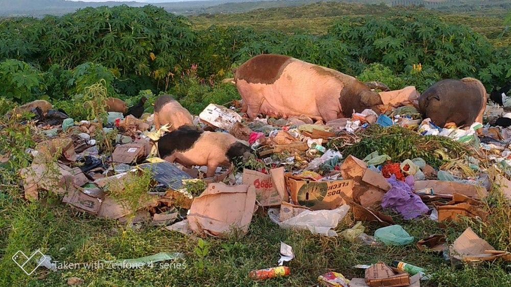 Homem é autuado por criar porcos em lixão e vender carne para estabelecimentos comerciais no Ceará