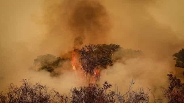 Voluntários vão à luta pelo Pantanal