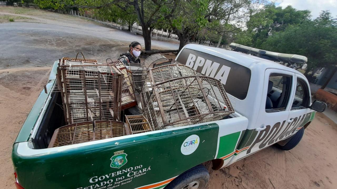 Polícia Ambiental apreende pássaros silvestres e arma em Milagres