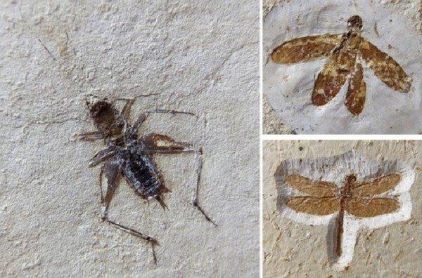 Polícia apreende na Alemanha fósseis do Ceará que eram vendidos por 100 mil euros
