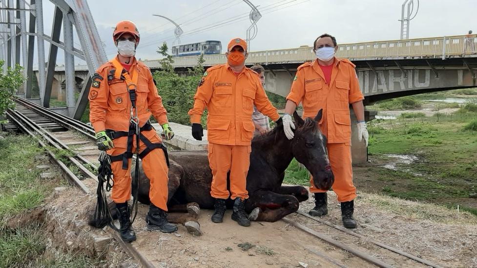 Bombeiros resgatam cavalo preso em trilho da antiga ponte ferroviária
