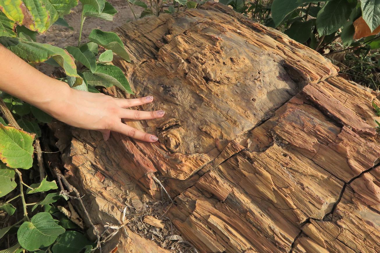 Em Brejo Santo, troncos fósseis revelam patrimônio paleontológico
