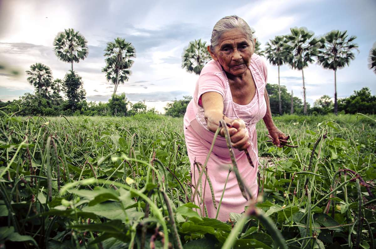 Hora de Plantar já distribuiu duas mil toneladas de sementes em 54 municípios