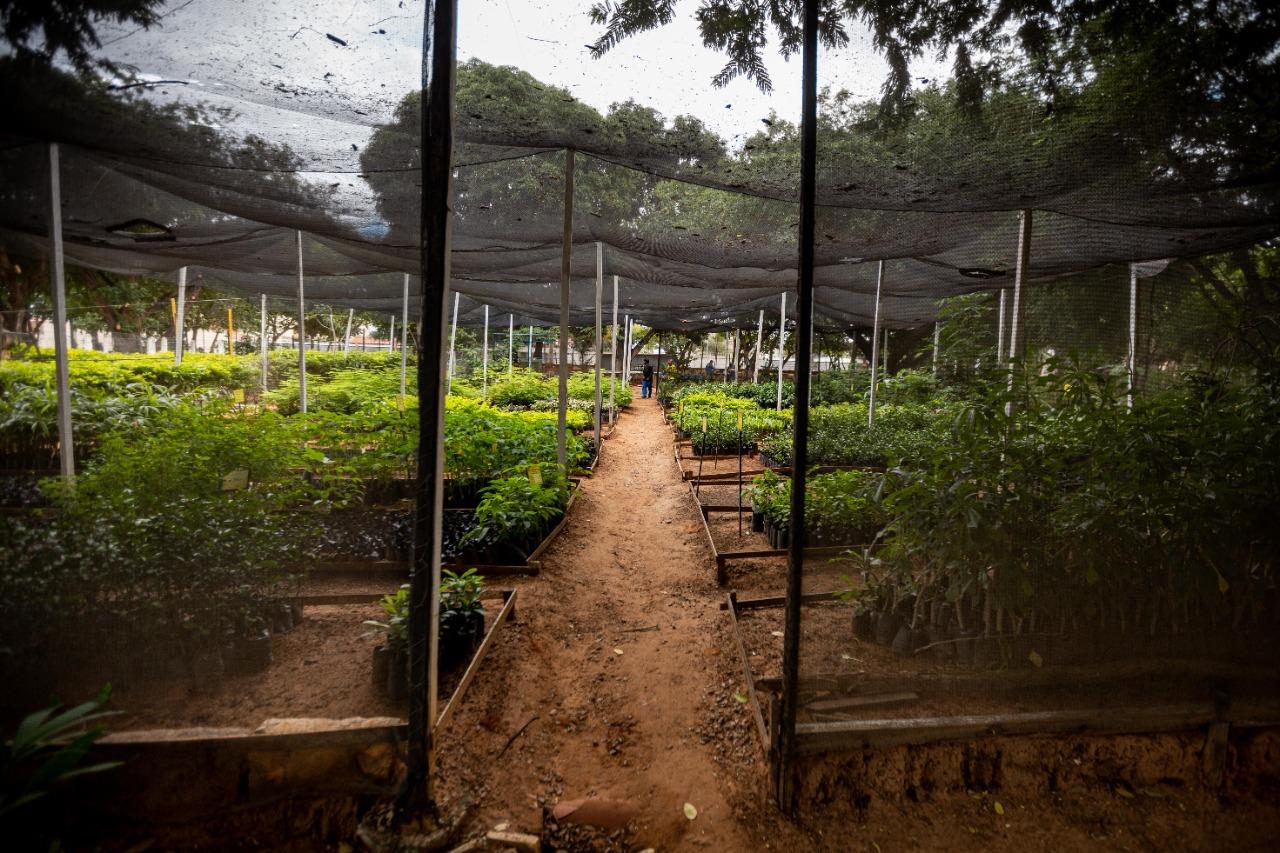 Juazeiro do Norte atinge nota máxima no Índice Municipal de Qualidade do Meio Ambiente